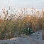 Sur les dunes du porge