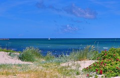 A perfect summer day (ole_G) Tags: perfectsummer denmark gilleleje beachrose