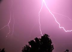 A purple sky (animalisterra) Tags: lightening nature natural wind rain tree purple canon 70d outside outdoors monsoon light