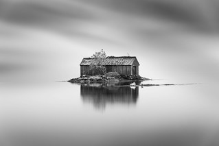 Swans and a cabin