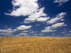Tuscan Sky (RobertCross1 (off and on)) Tags: 1250mmf3563mzuiko em5 eu europe firenze florence italia italy omd olympus siena toscana tuscany bluesky clouds fields grain grass landscape