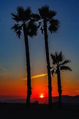 39 (morgan@morgangenser.com) Tags: sunset red orangeyellow blue pretty cloud silhouette sun evening dusk palmtrees bikepath sand beach santamonica pacificpalisades beautiful black dark cement amazing gorgeous inawe ca photobymorgangenser