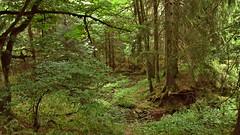 Am Gera-Radweg (kadege59) Tags: thüringen thuringia geraradweg thüringerwald wald forest trees deutschland canonpowershotsx230hs wow wonderfulnature