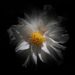 delicacy! (m_laRs_k) Tags: nyc brooklynbotanicalgarden usa flora 7dwf friday prime lighroomed olympus omd