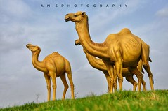 Animal of Kutch (Ansphotographyhub) Tags: happy happyfamily animal wildlife photography photooftheday