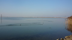 P1090787.JPG (papaniko) Tags: καλοχώρι λιμνοθάλασσα πουλιά