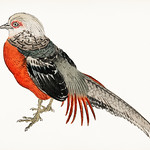 Japanese pheasant by Kōno Bairei (1844-1895). Digitally enhanced from our own original 1913 edition of Barei Gakan. thumbnail