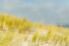North sea.........summer (Brigitte Lorenz) Tags: abstract dunes gras sea northsea nature icm