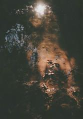 004.jpg (Tai Moura) Tags: kodak film filme 35mm proimage 100 trip100r olympus olympustrip100r lomo lomography lomografia
