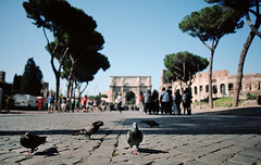 when in rome, part three (manyfires) Tags: italy europe travel vacation rome city cityscape film analog summer pigeons pigeon bokeh bird trees