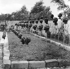 Statues of Heads (bongo najja) Tags: plantation whitney s pro c330 mamiya fp4 ilford