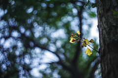 first signs of autumn (angel.doychinov) Tags: helios44m4mc58mm12 pentax k1 bokeh