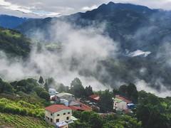清境早晨山嵐山景.....@Mt. Hehuan, Taiwan. (Evo-PlayLoud) Tags: appleiphonex iphonex mountain taiwan landscape scenery cloud green 合歡山 山嵐 山景 psexpress