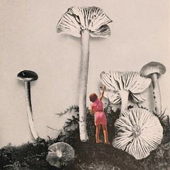 Magical dream (Mariano Peccinetti Collage Art) Tags: globular collage surreal collageartist peccinetti marianopeccinetti dream meditation retro arte psych art psychedelic flowers vintage vintageart trippy 70s 60s lsd dmt surrealist surrealism space fullmoon moon cosmic camp saturn rainbow yoga desert lovers world love stars sun planets planet jupiter fungi pink vaporwave vapor kid luminous child cutandpaste
