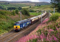 Tebay Wildflowers (Wheelnrail) Tags: drs direct rail services belmond northern belle train trains passenger rich shap cumbria mountains wildflowers west coast main line class 57 57304 1z74 hills