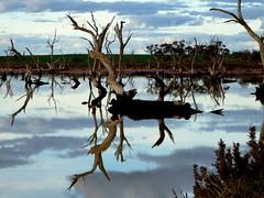 Evening reflections (Diepflingerbahn) Tags: reflection brackish lakes chinkapook victoria mallee turoar panasoniclumixdmctz80