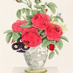 The Boquet by N. Currier. Original from Library of Congress. Digitally enhanced by rawpixel. thumbnail