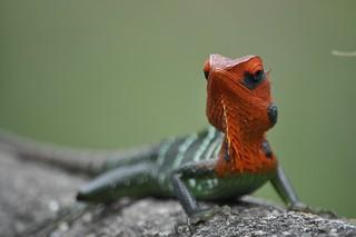 A Chameleon in The Jungle of Sri Lanka