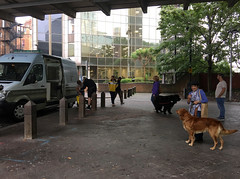 Monty the labrador (jovike) Tags: bollard dog espe graphicconverter london people tree