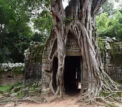 Angkor:  Ta Som (Яeиée) Tags: angkorvat angkorthom sanctuaire cambodge asie temples preahkhan taprohm siemreap baphuon bayon angkor khmer architecture patrimoines angkorlamerveilleuse banteaysrei bouddhisme hindouisme fromager takeo phimeanakas banian