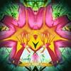 Peek a Boo (rhonda_lansky) Tags: peekaboo pink lily flower plant michigan tigerlily flowerart mirrorart symmetrical lansky rhondalansky
