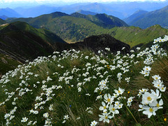 Montagna in fiore (stefano.chiarato) Tags: fiori flowers montagne mountains paesaggio panorami landscape pizzodeitresignori lombardia italy pentax pentaxk70 pentaxlife pentaxflickraward