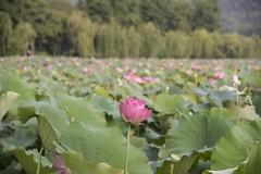 dsc_1269_1 (gaojie'sPhoto) Tags: hang zhou hangzhou westlake west lake