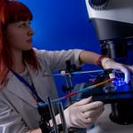 Лаборатория биофизики возбудимых систем
