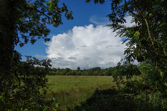 Between Showers at Lagan Meadows (Eskling) Tags: cloud cumulonimbus shower grass meadow trees frame blue sky northern ireland