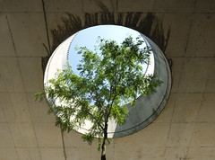 Urban Nature (CoolMcFlash) Tags: tree city vienna fujifilm xt2 urban green baum stadt contrast kontrast wien art kunst grün fotografie photography xf1024mmf4 r ois