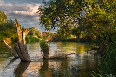Particular caring (piotrekfil) Tags: nature landscape water waterscape river flowers sunset reflections sky clouds tree pentax poland piotrfil