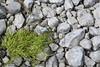 Skorradalur (helgibjarna) Tags: borgarbyggð borgarfjörður helgibjarnason hvítá hvítárbrú vesturland ylfakristínbjarnadóttir barnabörnin brýr börn fjölskyldan leikir ár íshokkí íþróttir