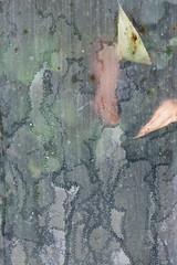 snail art (Francis Mansell) Tags: abstract snail trail leaf glass glasshouse greenhouse waterlilyhouse kewgardens kew royalbotanicgardenskew algae plant