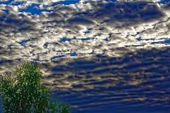_MG_1479_DxO (carrolldeweese) Tags: wolflake mi michigan water