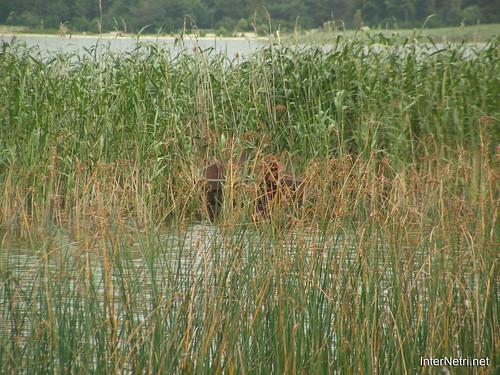 Згоранські озера, Волинь, 2006 рік InterNetri.Net  Ukraine 086