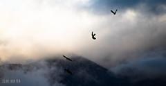 Cerro de la Campana (Club Vortex) Tags: nature naturaleza wild wildlife life fauna flower clouds cloud sky heaven chile canon canont5 chilean quillota quintaregion viñadelmar valparaiso hill hills