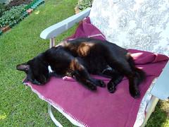 Cat on holiday (transport131) Tags: kot cat animal zwierzę ogród garden lato summer