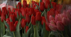 How Many Lips (Scott 97006) Tags: red flowers tulip sale beauty nature