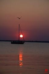 Ærøskøbing Sunset (Venom-Pictures) Tags: segeln sailing nature sunset sonnenuntergang möwe gull