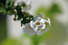 Lill (Jaan Keinaste) Tags: pentax k3 pentaxk3 eesti estonia lill flower loodus nature