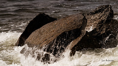DSC04077.jpg (fotolasse) Tags: sonykarlshamnfåglarstorm karlshamn storm blåst vatten rågar hamn hav sjö båtar water sea birds rocks klippor