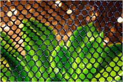MESH (Vicent Ramiro) Tags: bokeh macro cactus mesh macromondays malla