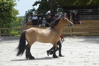 2018.06.21.053 HARAS du PIN - Spectacle équestre, présentation des chevaux