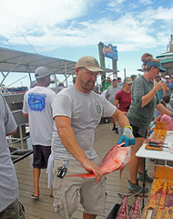 IMG_2912 (FWC Research) Tags: atlanticredsnapper redsnapper fisheriesdependentmonitoring snappersamplling