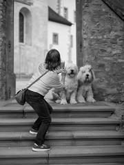 Rheingau-taking photos (ckhde) Tags: csonnart1550 zeiss dogs bobtail oes sheepdog oldenglishsheepdog zm people carlzeiss ilce7rm2 street