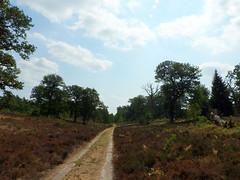 Heathland (StrongGrace Photography) Tags: nikoncoolpixp610 nature natur breesergrund staatsforstgöhrde heide heather hutewald forestpasture tree baum wald forest sky himmel path feldweg