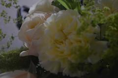 DSC_0086 (sxcxxhx) Tags: japan osaka kyoto hydrangea flower trip voyage 日本 大阪 京都 旅行