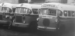 COOPERATIVA DE OMNIBUS ALIADOS, Rutas 26 y 27 No. 703 y 722  VEDADO-AYUNTAMIENTO  via LINEA (ROGALI) Tags: cooperativadeomnibusaliados no703 no722 vedadoayuntamiento guaguasdecuba guagua omnibus bus tranbus coa habana cuba ruta 26 rogali