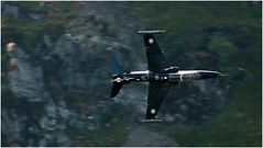 Cad West (mandysp8) Tags: machloop machynllethloop hawk wales uk canon 750d