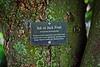 Lichen on jack fruit tree (LarryJay99 ) Tags: mountsbotanicalgardens nature westpalmbeach florida plants foliage urbanvegetation tree lichen greenery jackfruit treebark bark labels